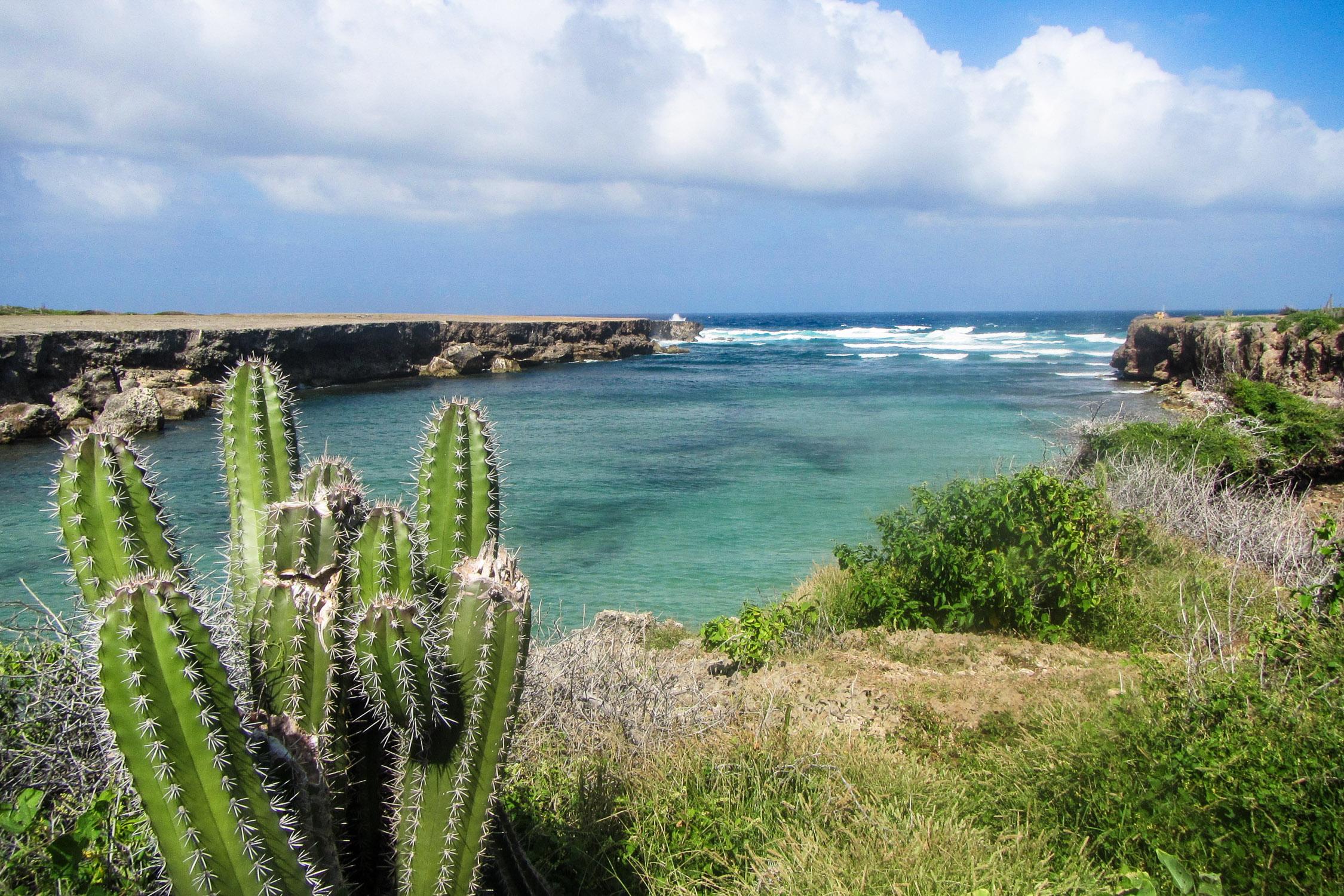 Curacao Tortuga Trail Kaktus