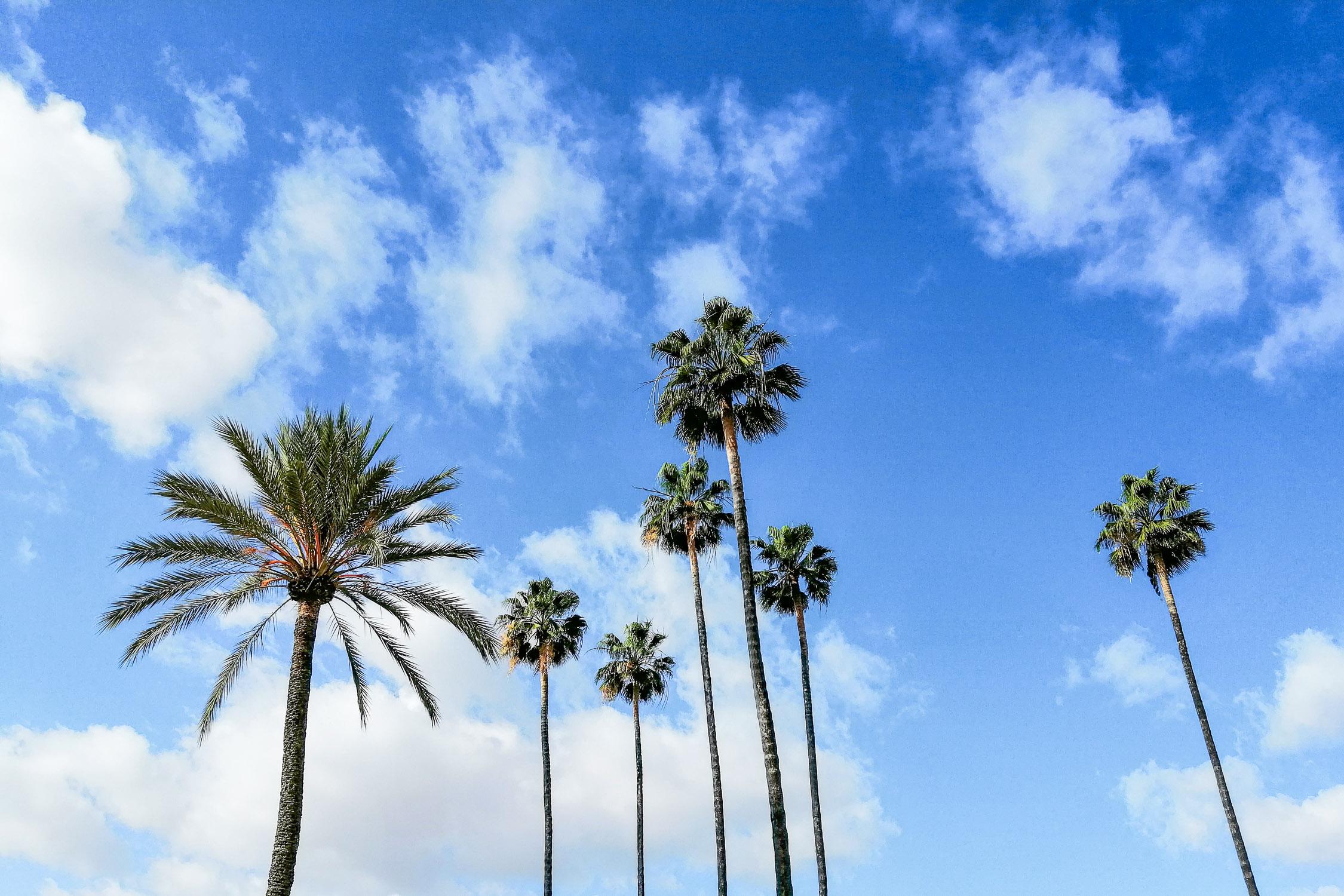 Sevilla Palmen Sonne